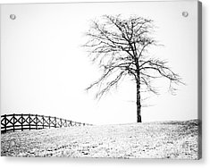 Winter In Black And White Acrylic Print by David Waldrop
