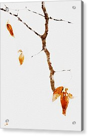 Winter Interludes Acrylic Print by Ron Jones