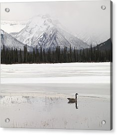 Winter Landscape, Banff National Park Acrylic Print by Keith Levit