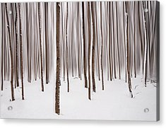 Winter Acrylic Print by Mircea Costina Photography