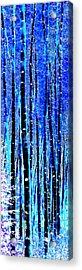 Winter Night In An Aspen Grove Acrylic Print by Terril Heilman
