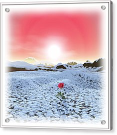 Winter Rose Acrylic Print by Harald Dastis