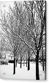 Winter Trees Acrylic Print by Chris Barber