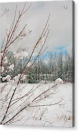 Winter Woods Acrylic Print by Joann Vitali