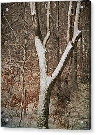 Winter Woods Acrylic Print by Odd Jeppesen
