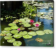 Wishes Among The Water Lilies Acrylic Print by Methune Hively