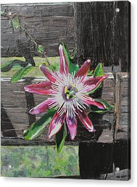 Wooden Fence Acrylic Print by Melissa Torres