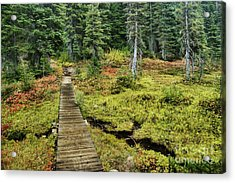 Wooden Foot Bridge Over Stream Acrylic Print by Ned Frisk