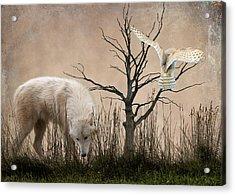 Woodland Wolf Acrylic Print by Sharon Lisa Clarke