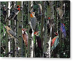 Woodpecker Collage Acrylic Print by David Salter