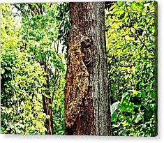 Woodpecker Tree Acrylic Print by Piety Dsilva