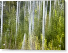 Woods Abstact Acrylic Print by Andrew Soundarajan