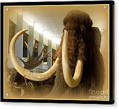 Wooly Mammoth Acrylic Print by Lainie Wrightson
