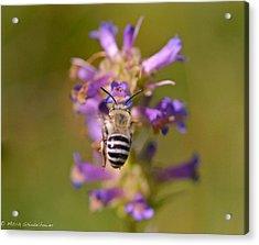 Worker Bee Acrylic Print by Mitch Shindelbower