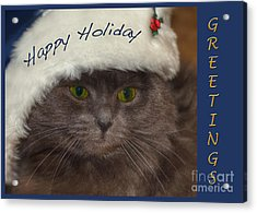 Yankee Cat Acrylic Print by Joann Vitali