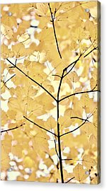 Yellow Brown Leaves Melody Acrylic Print by Jennie Marie Schell