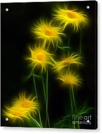 Yellow Daisy Floral  Acrylic Print by Marjorie Imbeau