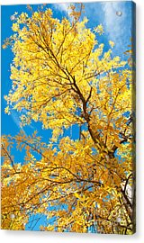 Yellow On Blue Acrylic Print by Bob and Nancy Kendrick