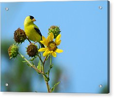 Yellow On Yellow Acrylic Print by Don L Williams