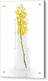 Yellow Orchid In Vase Acrylic Print by Atiketta Sangasaeng