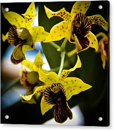 Yellow Orchids Acrylic Print by David Patterson