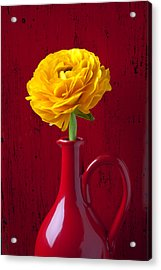 Yellow Ranunculus In Red Pitcher Acrylic Print by Garry Gay