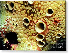 Yellow Sponge Holes Acrylic Print by Sami Sarkis