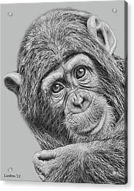 Young Chimp 5 Acrylic Print by Larry Linton