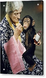 Young Chimpanzee Sips Medicine Acrylic Print by B. A. Stewart And David S. Boyer