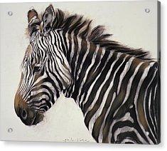 Zebra  Acrylic Print by Odile Kidd