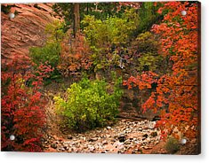 Zion Fall Colors Acrylic Print by Dave Dilli