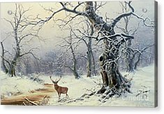 A Stag In A Wooded Landscape  Acrylic Print by Nils Hans Christiansen