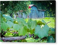 Fields Of Green Acrylic Print by Karen Wiles