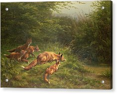 Foxes Waiting For The Prey   Acrylic Print by Carl Friedrich Deiker