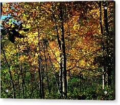 Michigan Fall Colors 2  Acrylic Print by Scott Hovind