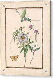 Passion-flower Acrylic Print by Madeleine Francoise Basseporte