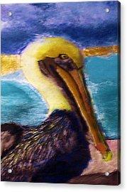 091415 Pelican Acrylic Print by Garland Oldham