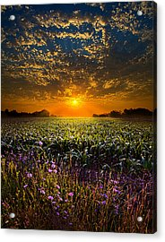 A New Day Acrylic Print by Phil Koch