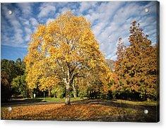 A Touch Of Autumn  Acrylic Print by Martina Fagan