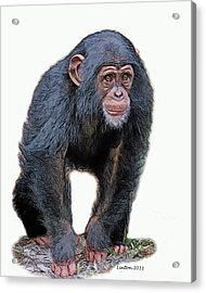 African Chimpanzee Acrylic Print by Larry Linton