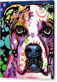 American Bulldog Acrylic Print by Dean Russo