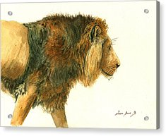 Asiatic Lion Acrylic Print by Juan Bosco