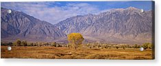 Autumn Color Along Highway 395, Sierra Acrylic Print by Panoramic Images