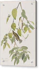 Autumnal Warbler Acrylic Print by John James Audubon
