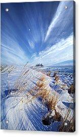 Azure Acrylic Print by Phil Koch