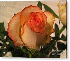 Beautiful  Rose Acrylic Print by Joyce Woodhouse
