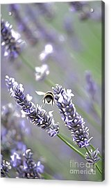 Bee Acrylic Print by Andrew Michael