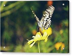 Butterfly On Flower Acrylic Print by Nguyen Truc