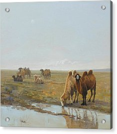 Camels Along The River Acrylic Print by Chen Baoyi