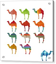 Camels Acrylic Print by Art Spectrum